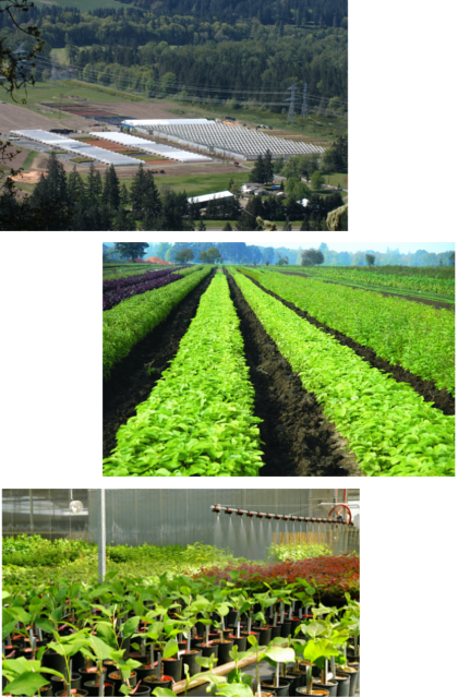 Heritage Seedlings Production Options