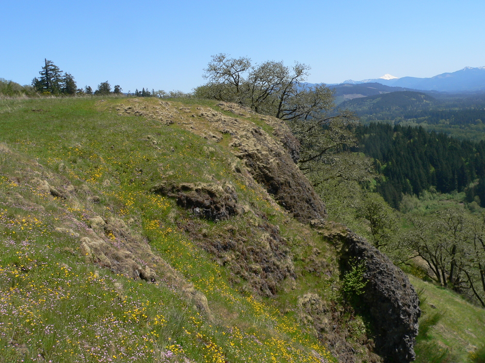 Herbaceous, Rocky Balds and Bluffs