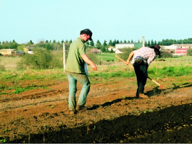 Planting seed beds in the early days